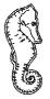 Poinçon Or 24 Carats Hyppocampe